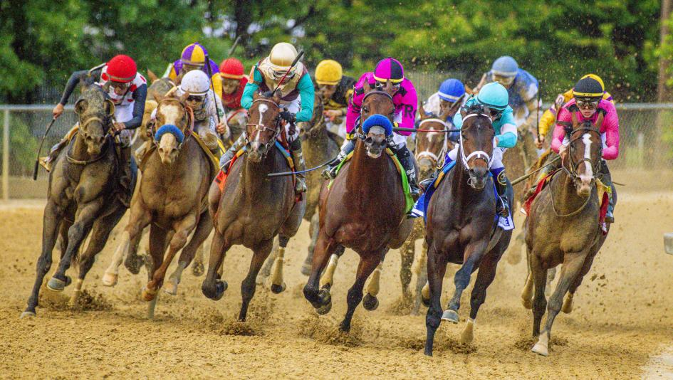 betting the preakness stakes