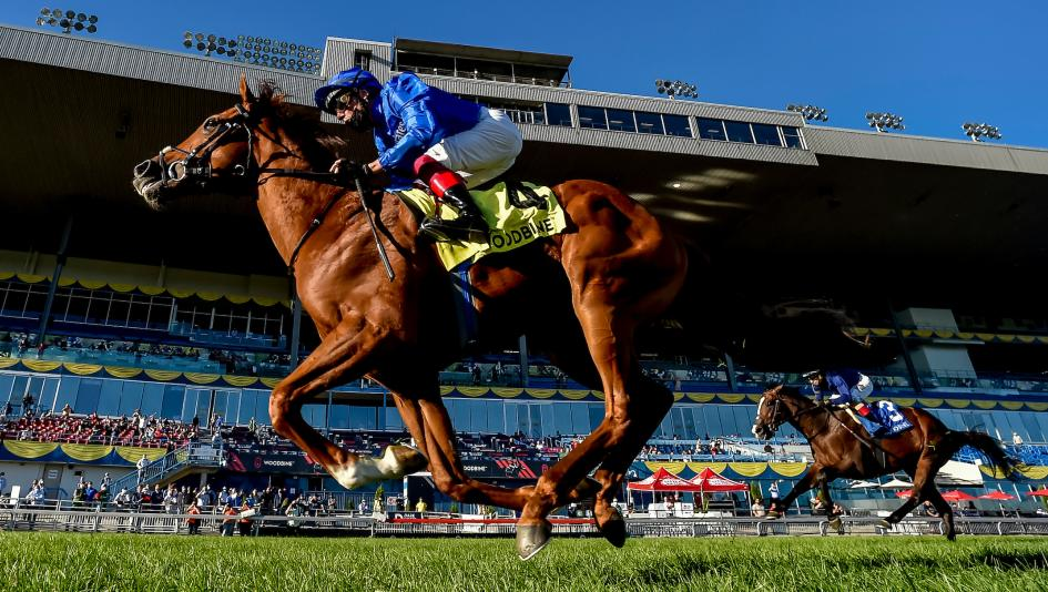 Albahr, Wild Beauty Complete Incredible Weekend for Godolphin and Appleby by Earning Breeders' Cup Bids