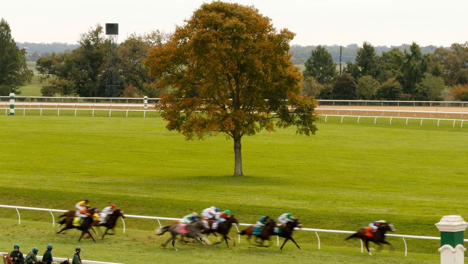 StableDuel Contest Picks for Keeneland's Wednesday Oct. 27 Card