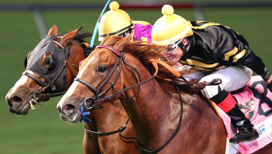 How to bet on horses at oaklawn macrory cup bettingadvice