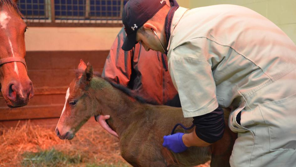 Hagyard Institute: The Mayo Clinic of the Horse World