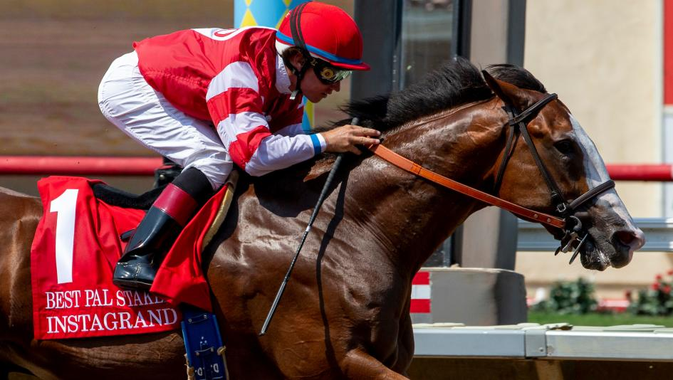 Road to 2018 Breeders' Cup: Three Heating Up, Three Cooling Down for Aug. 15