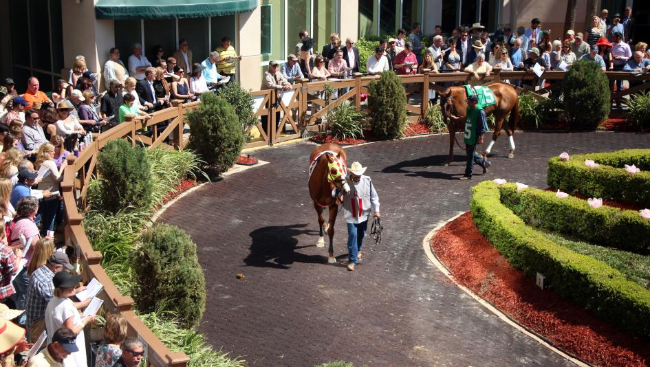 Where To Watch Listen During Florida And Louisiana Derby