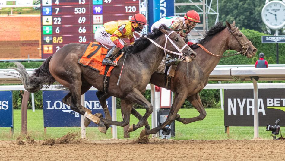 race horse betting calculator trifecta