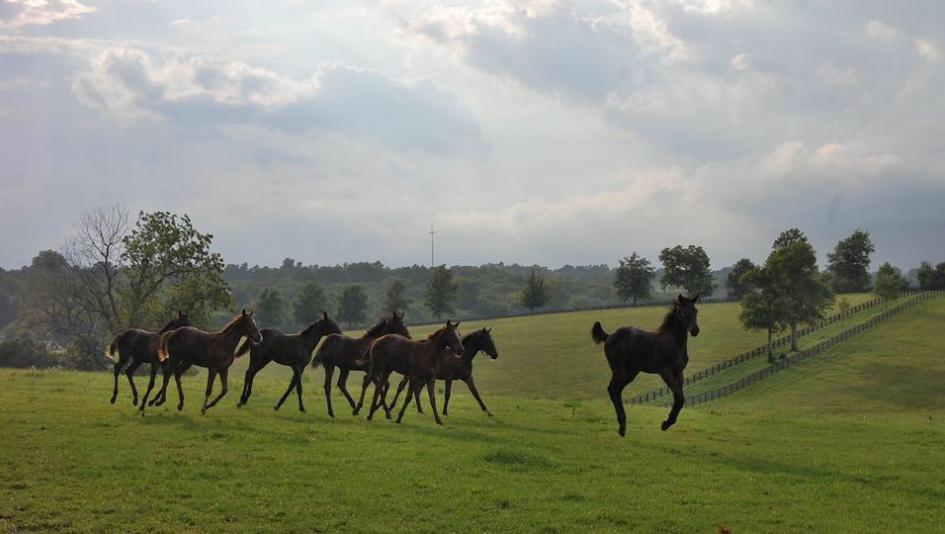 Visit Horse Country: Building a Winning Tradition at Stonestreet