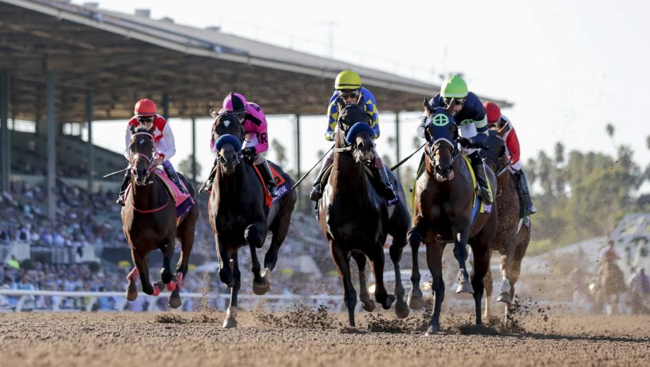 Tvg horse betting santa anita sports betting totals explained that