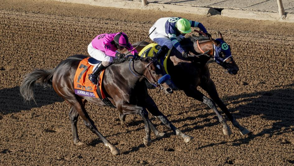 Storm the Court Scores Wild Upset in Breeders' Cup Juvenile