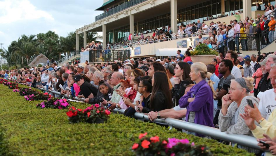 Kentucky Derby Trail Heats Up in Fountain of Youth
