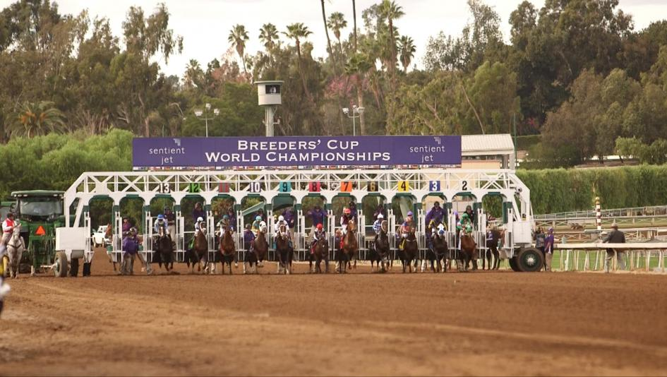 Breeders' Cup Returns to Santa Anita, Full Coverage on NBC Sports