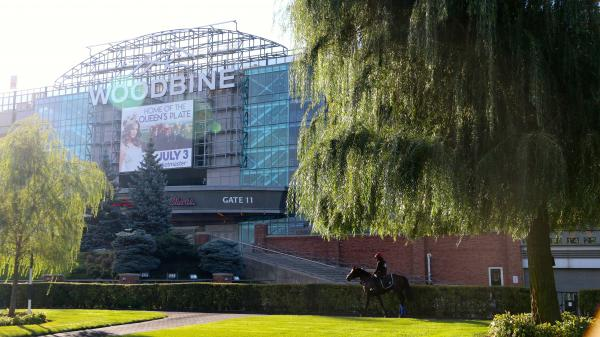 Woodbine Diaries: A Morning With a Royal Racehorse