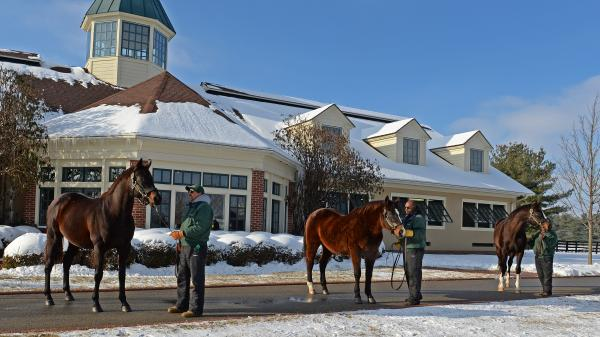 Lane's End: Tradition-Rich Farm with an Eye to Racing's Future