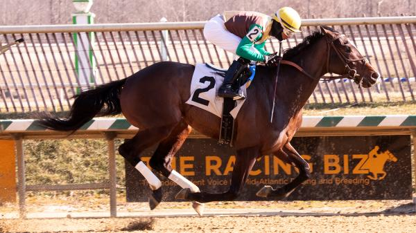 Why Alwaysmining Should Be Viewed as Serious Player in Preakness - America's Best Racing