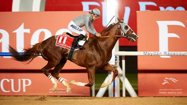 California Chrome Gets Redemption in Dubai World Cup
