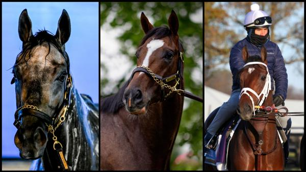 SLIDESHOW: Meet the 2021 Belmont Stakes Contenders