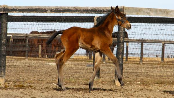 Foal Patrol Season 2 Debuts Dec. 28 with Open House at Hall of Fame