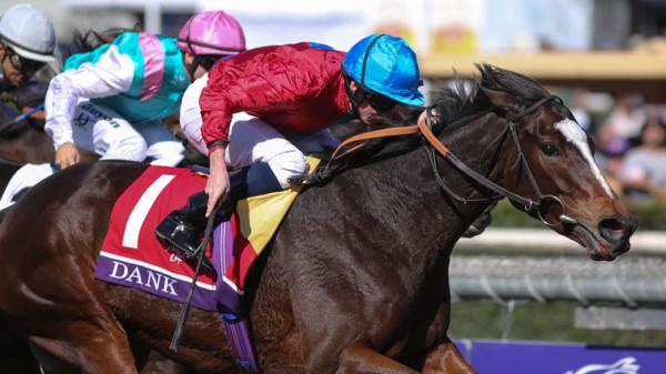 Foreign Horses You Should Know At The Breeders Cup