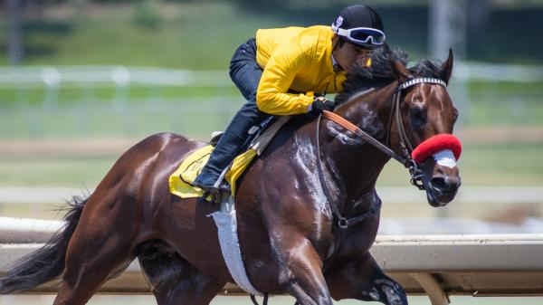 Derby Winner Nyquist Headed To Haskell America S Best Racing