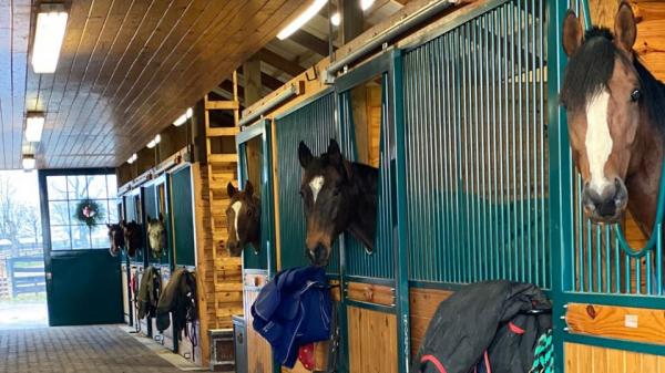 Visit Horse Country: Keene Ridge Farm, Small and Successful