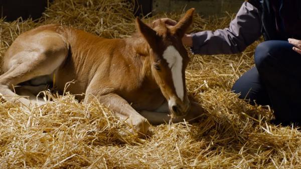 DREAM HORSE: Official Trailer