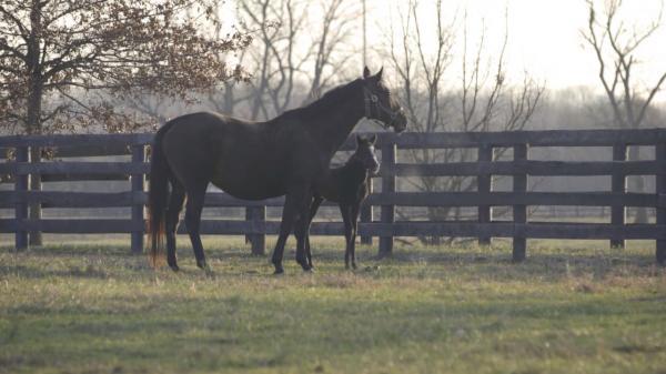 Foal Overload: Mill Ridge Romp