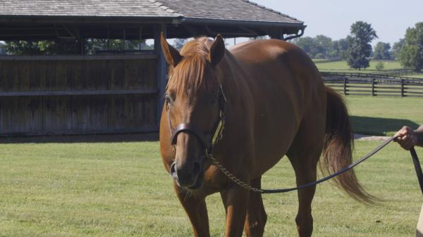 Seen … Behind the Scenes with Gun Runner at Three Chimneys