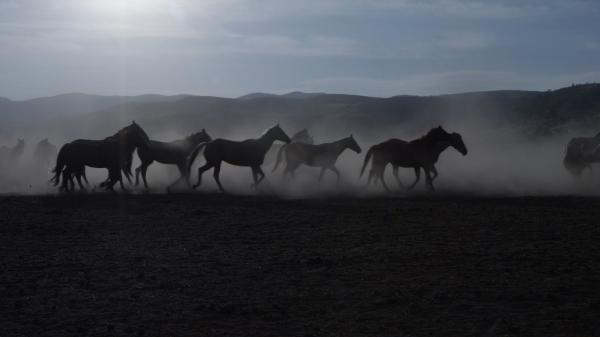 When Horses Heal: Heroes and Horses