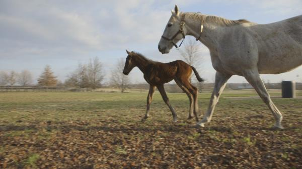 Foal Overload: Paddock Frolic
