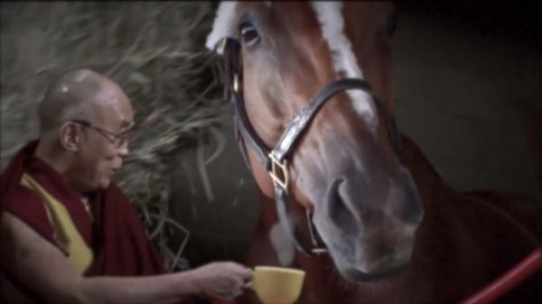 Wise Dan: The Most Interesting Horse in the World, No. 3