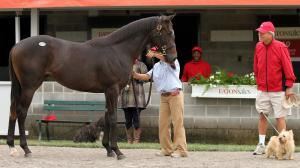 Consummate Owner-Breeder Strawbridge Shining on Both Sides of Atlantic