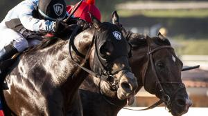 Breeders' Cup Next for Omaha Beach After Gutsy Win in Sprint Championship