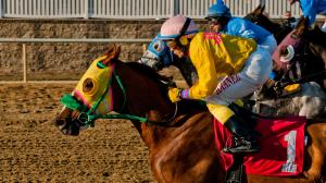 2020 Maryland Million Classic Cheat Sheet