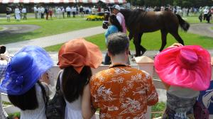 Helpful Tips for Gambling on Whitney Stakes Card