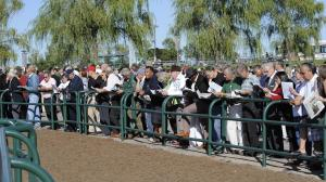Stay Lucky Guide: Journey North to Woodbine