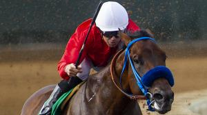 Five 2-Year-Olds to Follow From Summer Meet at Del Mar