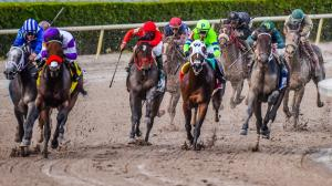 Five Questions to be Answered in the 2019 Xpressbet.com Florida Derby