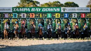 Tampa Bay Downs America S Best Racing