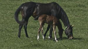 Cute Foals of the Week for June 15