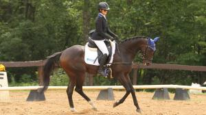 Thoroughbred Makeover Diary: Mr. Park Shines, Big Plans Ahead