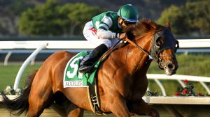 Accelerate remains the top-ranked Thoroughbred in the country heading into the final round of Breeders' Cup prep races.