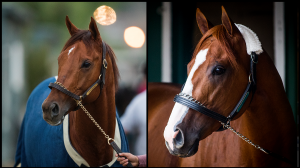 Accelerate, Justify Top Eclipse Awards Finalists