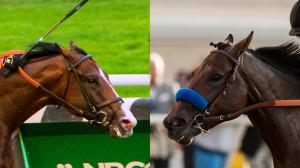 Complexity and Game Winner are among the 2-year-olds facing off in the Breeders' Cup Juvenile on Friday.