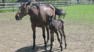 Cute Foals of the Week for March 12