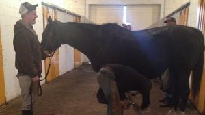Claiborne Chronicles: Importance of Hoof Care