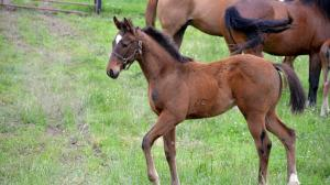 Cute Foals of the Week for May 21