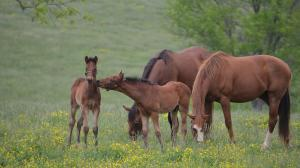 Cute Foals of the Week for June 4