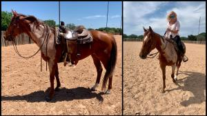 Thoroughbred Makeover Diary: Grace, Eagerness to Learn Make Pied Strong Student