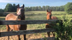 Thoroughbred Makeover Diary: Embracing the Unexpected