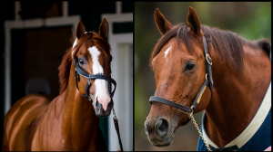 Eng: Choosing Between Two Worthy Horse of the Year Candidates