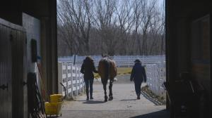 A Firmer Footing for Retired Horses and Veterans