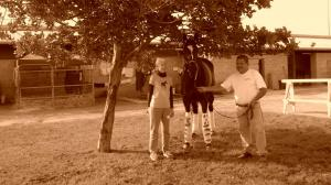 One Brief Shining Moment: Memories of a Last Visit with Zenyatta